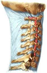 Растирка от боли в суставах – Если болят суставы, то этот рецепт поможет за 3-5 процедур, даже при очень сильных и